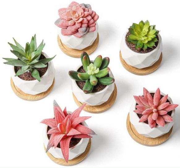 Pack 6 plantas decorativas