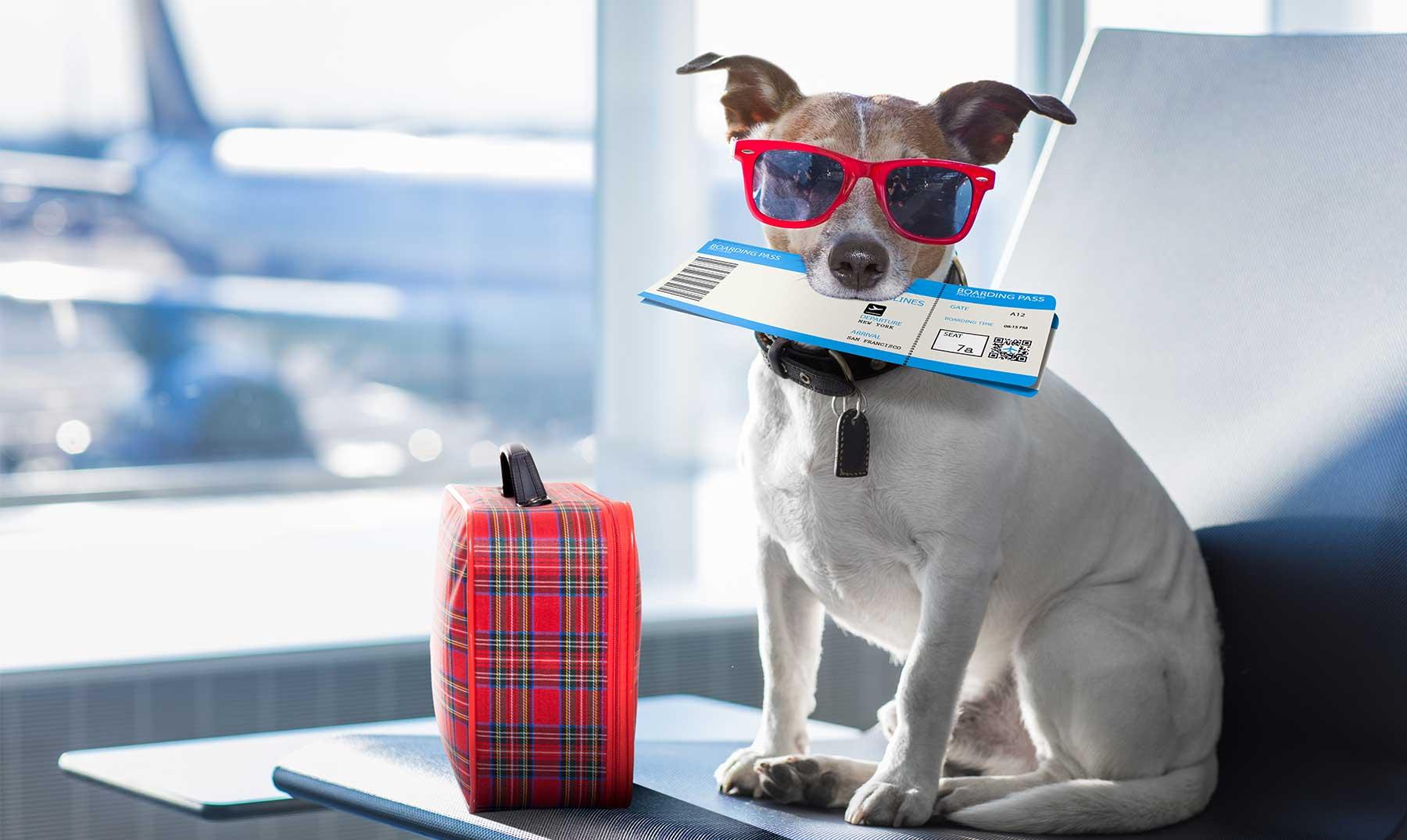 Miles de ofertas en vacaciones de verano con tus mascotas 4 Noches de Hotel 2/3/4* + desayuno + cancelación gratis desde 35€/p.p.