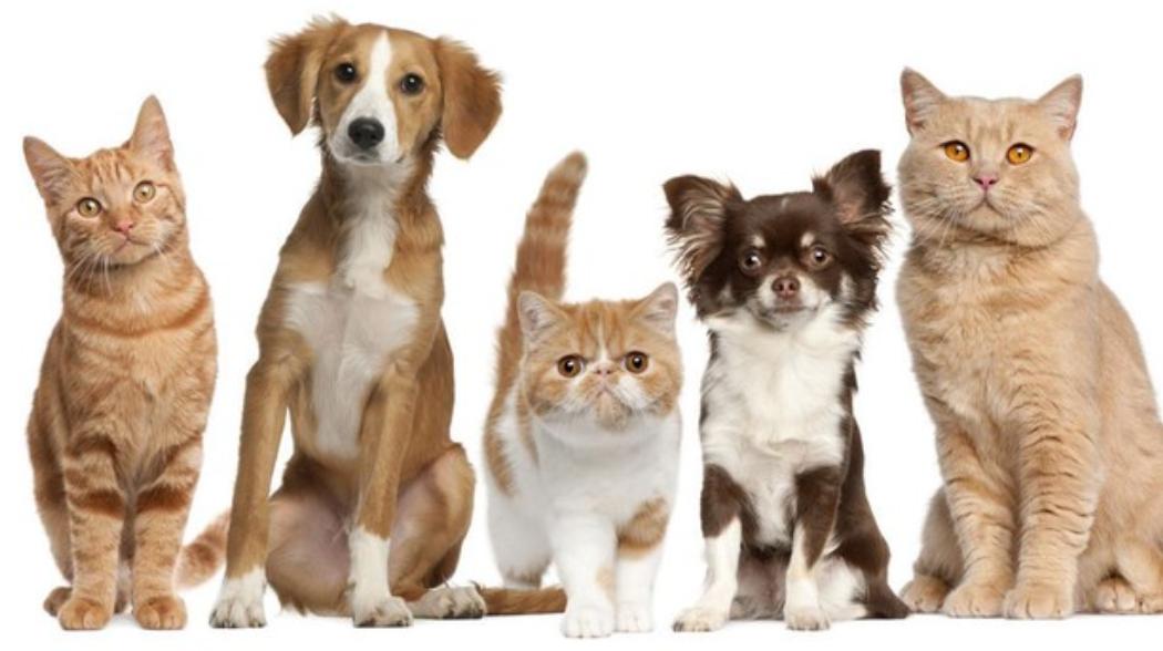 Recopilación de promociones y descuento para tu mascota