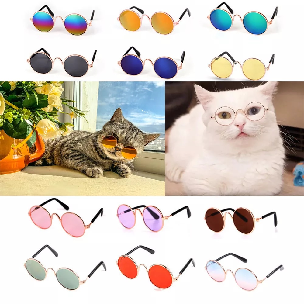 Gafas de sol para mascotas